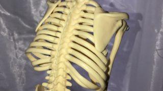 運動のバネとは? 脊椎操作による全身の連動について